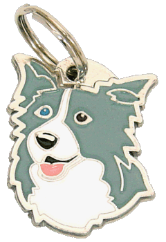 pet tag-BORDER COLLIE BLUE ODD EYED